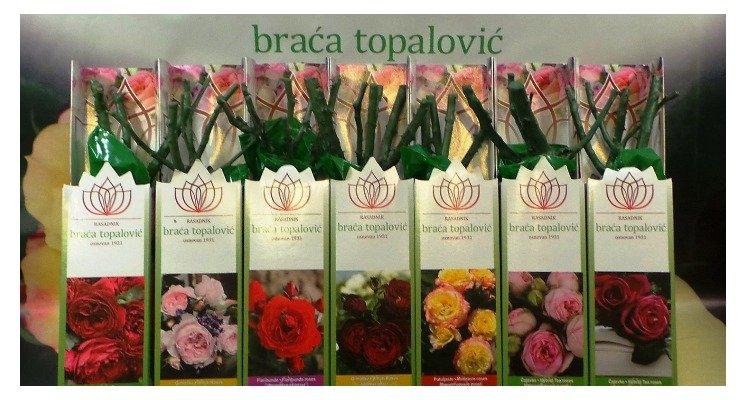 Розы топаловичей на 2020 год